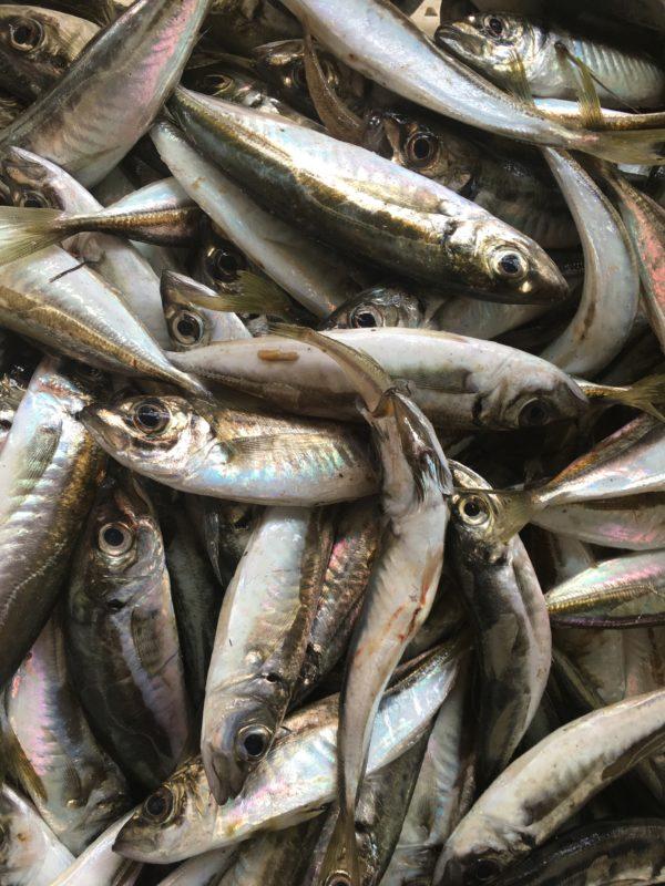 Рыба и морские деликатесы на Азовском море